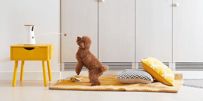 Furbo Pet Camera with Feeder